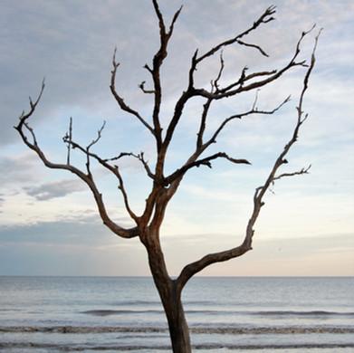 Tree on Jekyll Island