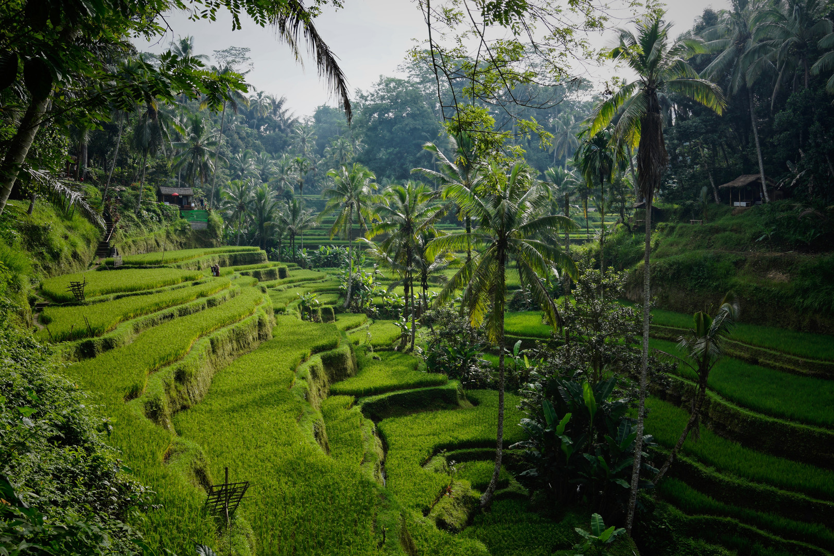 What Bali is known for: these views