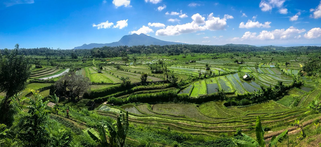 The imfamous Balinese rice fields