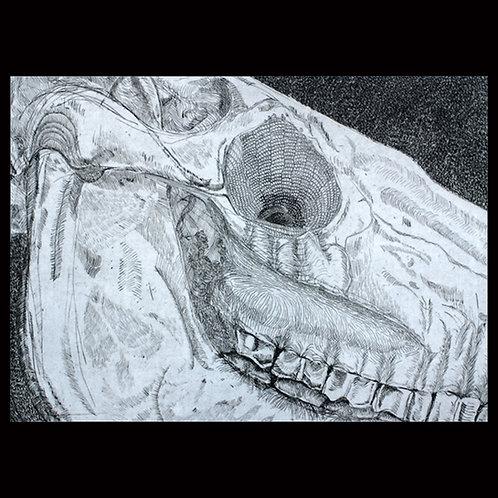 "Horse Skull ""L'Occhio"" by Onah Indigo"