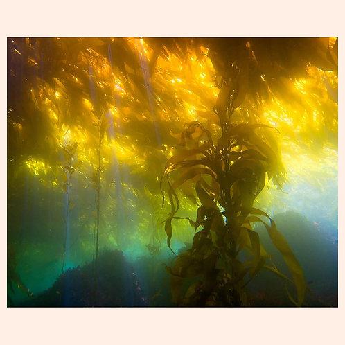 Kelp on Fire by C. Alexander Martin