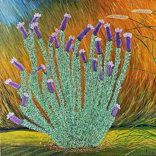 French Lavender by Isa
