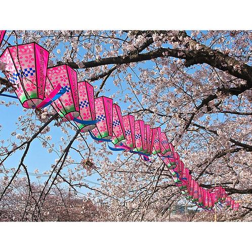 Spring Arrives!, Yokohama 2012 by Tom Adams