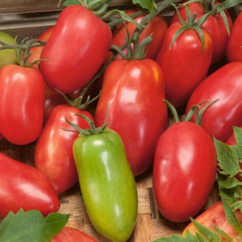 Tomato, Amish Paste