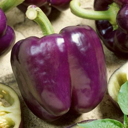 Pepper, Purple Beauty 2 pk