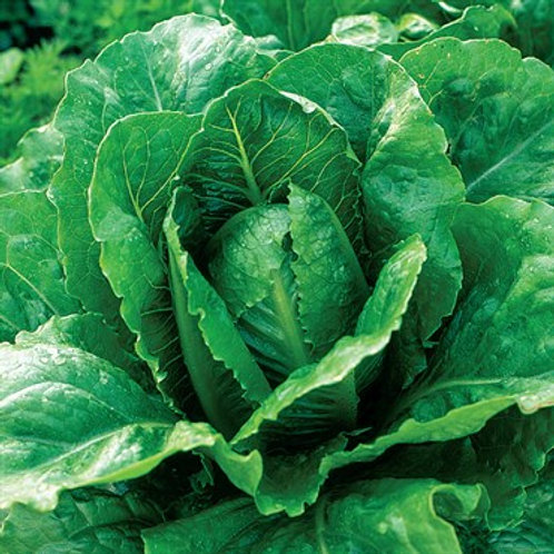 Lettuce, Romaine Paris Island 2 pk