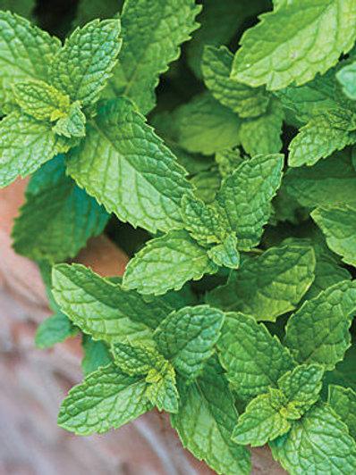 Herb, Mint Spearmint