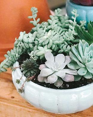 Greenhouse_Succulents-1.jpg