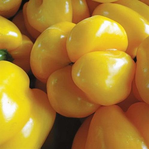 Pepper, California Wonder Golden 2 pk
