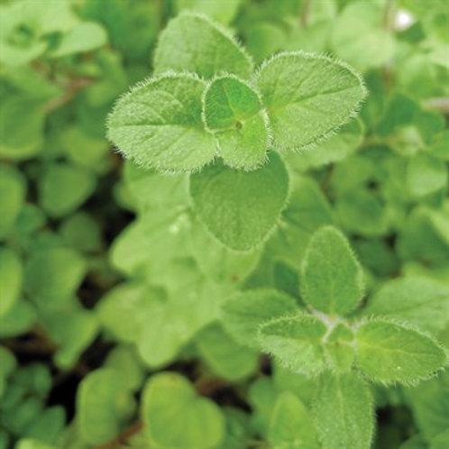 Herb, Marjoram Sweet 3.25 in pot