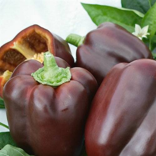 Pepper, Chocolate Beauty 2 pk
