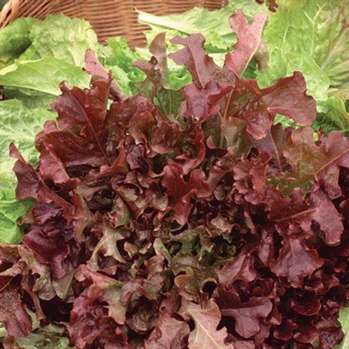 Lettuce, Red Salad Bowl 2 pk