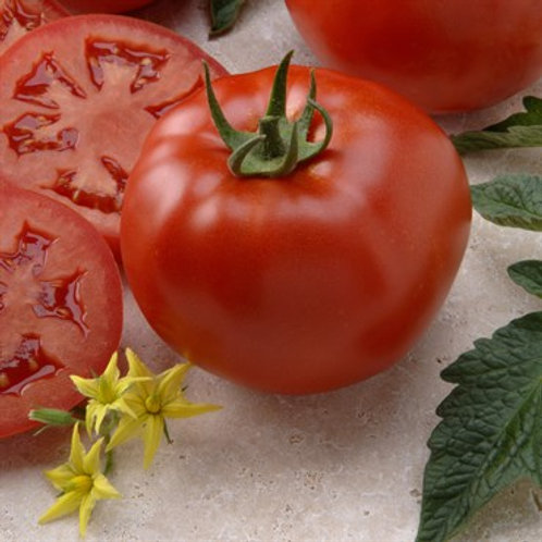 Tomato, Better Boy