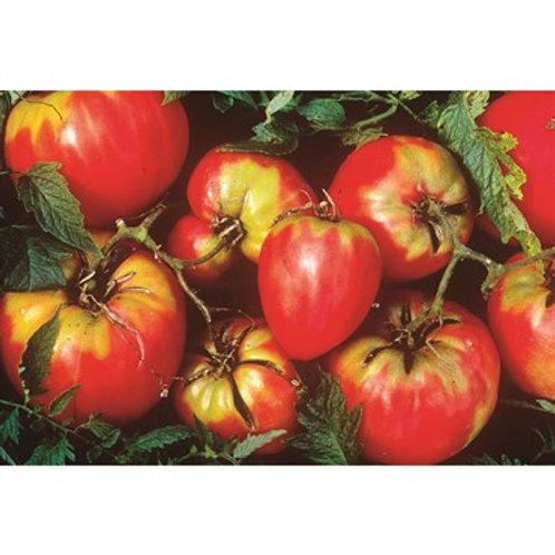 Tomato, Oxheart