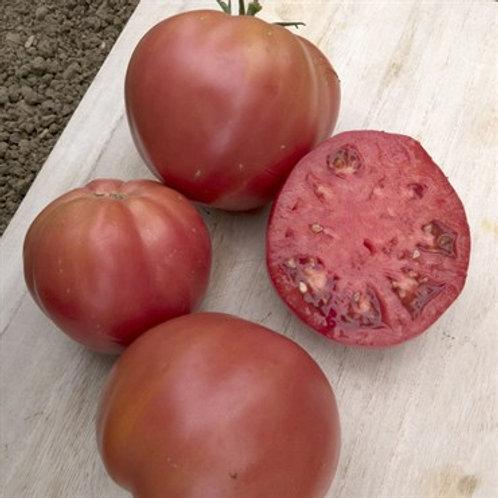 Tomato, Brandywine Pink
