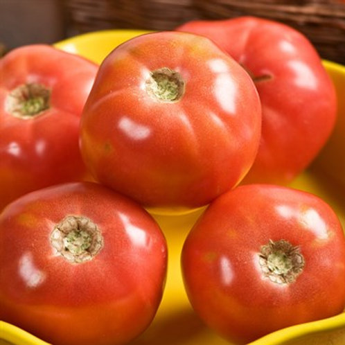 Tomato, Pink Girl