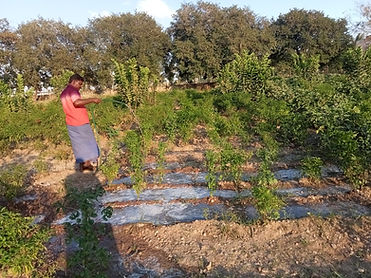 Growing vegetables.jpeg