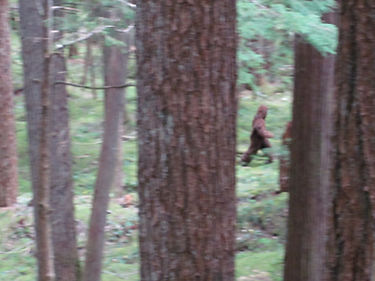 Sasquatch Sighting Mt Rainier Gina Coffm