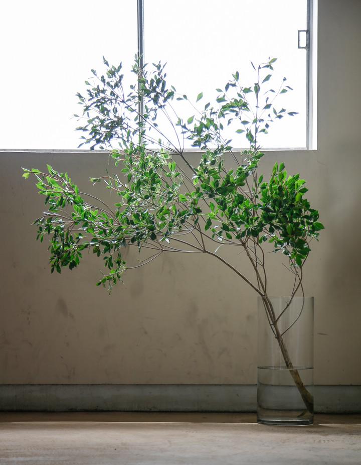 枝もので、お部屋に涼を