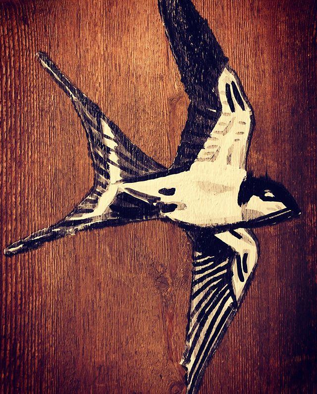 #piepmatz#piepvogel #schwalbe #duvogel #
