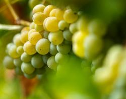 Spa des Clos Chablis Chardonnay