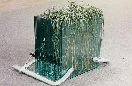 Wiesennotiz, Gras gepresst in Glas