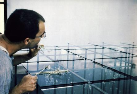 Mann - Roger Aupperle - pustet Pflanzensamen über eine lange Glasplatte, Pusteblumen