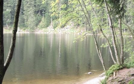 Seeufer in mitten eines Waldes, Mummelsee, Schwarzwald