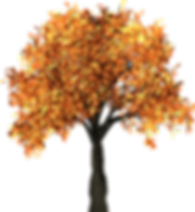 tree-1658814_960_720.png