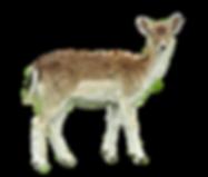 roe-deer-3499921_1920.png
