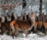 animals-1147625_1920.jpg