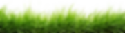 grass-png--2500.png
