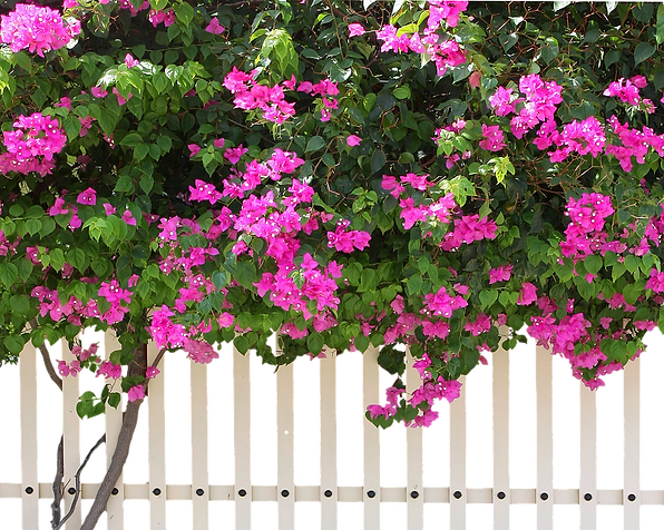 fence-2892257_960_720.png