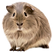 kisspng-guinea-pig-rodent-pet-animal-gui