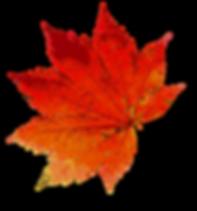 autumn-1608537_960_720.png
