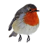 robin-redbreast-perching.png