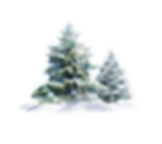 fir-pine-family-christmas-decoration-for