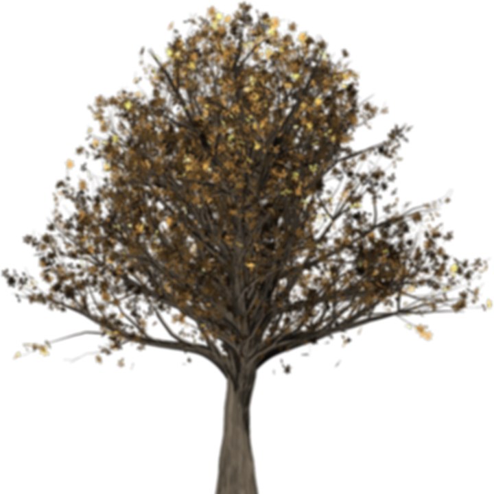 tree-1613729_960_720.png