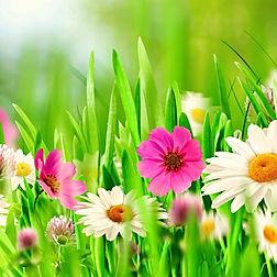 flower-full-hd-wallpaper-9.jpg