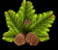 pinheiro-2031696_1280.png