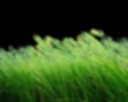 grass-png-grass-png-image-green-grass-pn