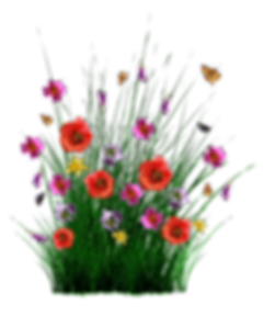 spring-1402599_960_720.png