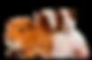kisspng-guinea-pig-mouse-rodent-hamster-
