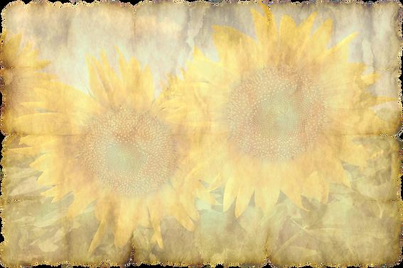 parchment-3660295_960_720.png