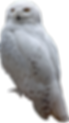 snow-1280179_1920.png