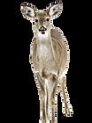 deer-1210972_1920_edited_edited.png