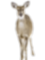 deer-1210972_1920_edited_edited.png