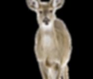 deer-1210972_1920_edited.png