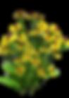 flora-2125698__340.png