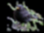 black-bird-clipart-56793.png